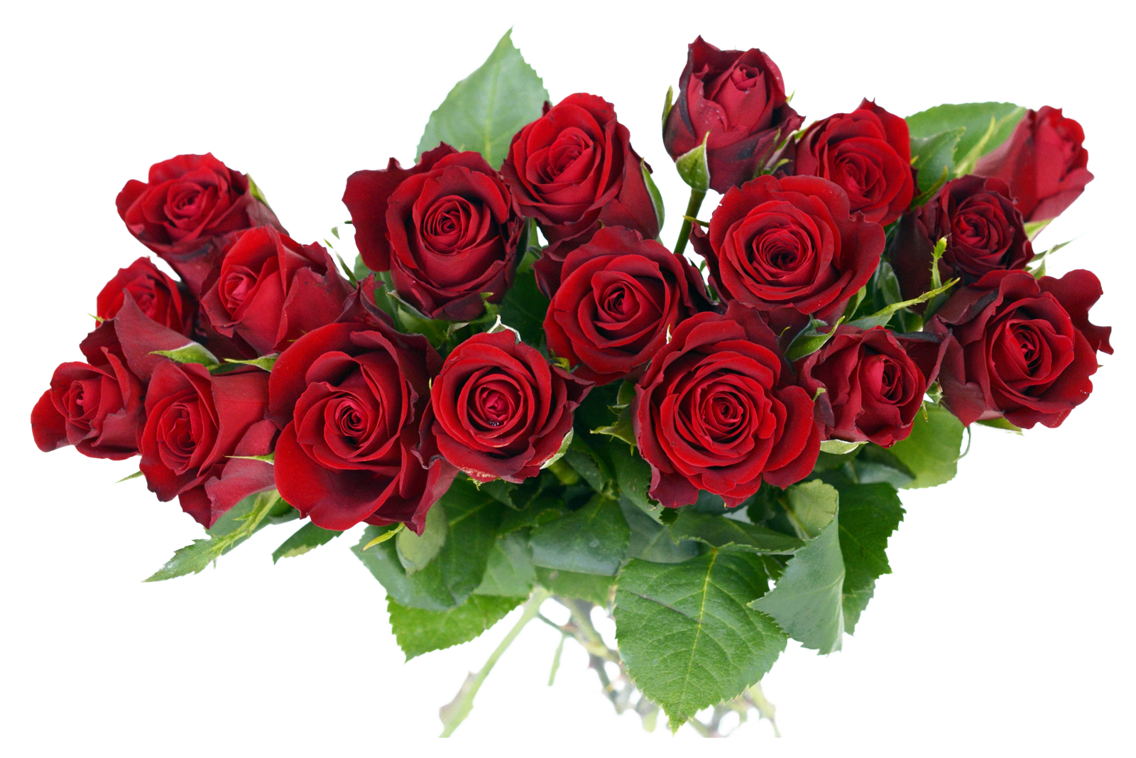 PNGPIX-COM-Rose-Bouquet-PNG-Transparent-Image