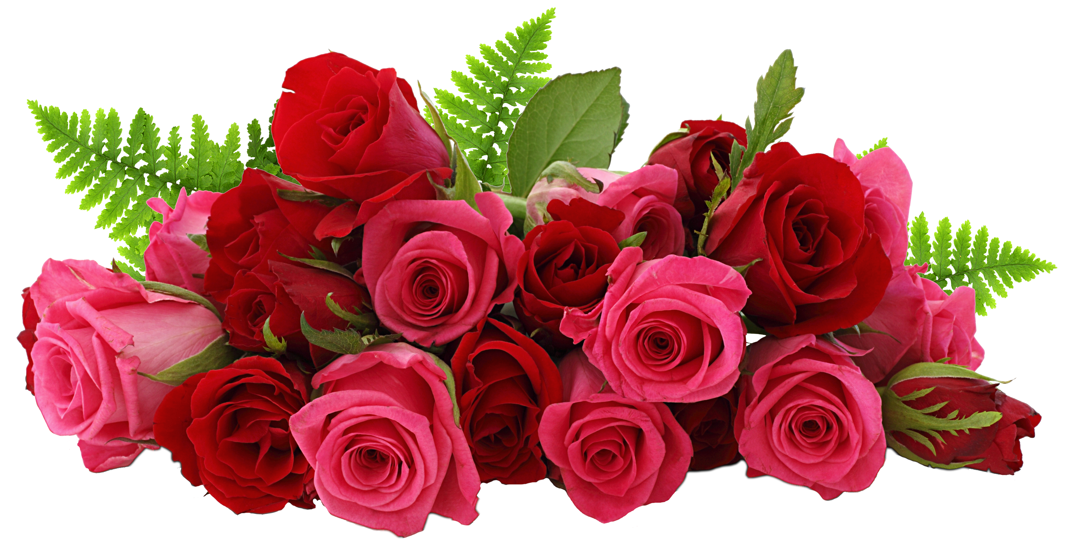 Red_and_Pink_Roses_PNG_Picture